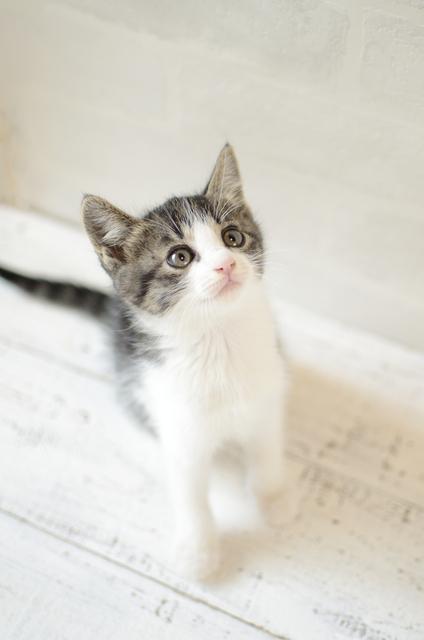 猫と触れ合える♪癒し空間「ねこぶくろ」に子どもと行こうの画像1
