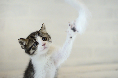 猫と触れ合える♪癒し空間「ねこぶくろ」に子どもと行こうのタイトル画像