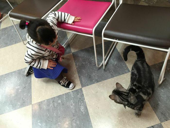 猫と触れ合える♪癒し空間「ねこぶくろ」に子どもと行こうの画像2