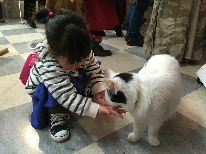 猫と触れ合える♪癒し空間「ねこぶくろ」に子どもと行こうの画像3
