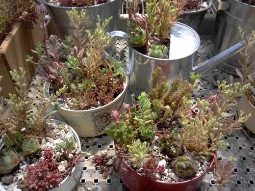 インテリアにもなる!今、話題の多肉植物の育て方のタイトル画像