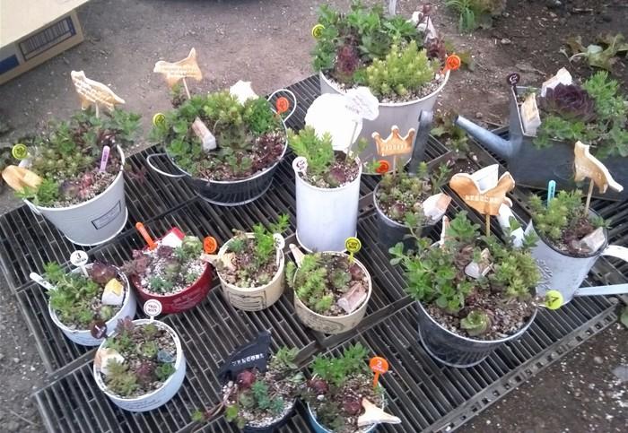 子どもと一緒に♪多肉植物の寄せ植えの方法!の画像1