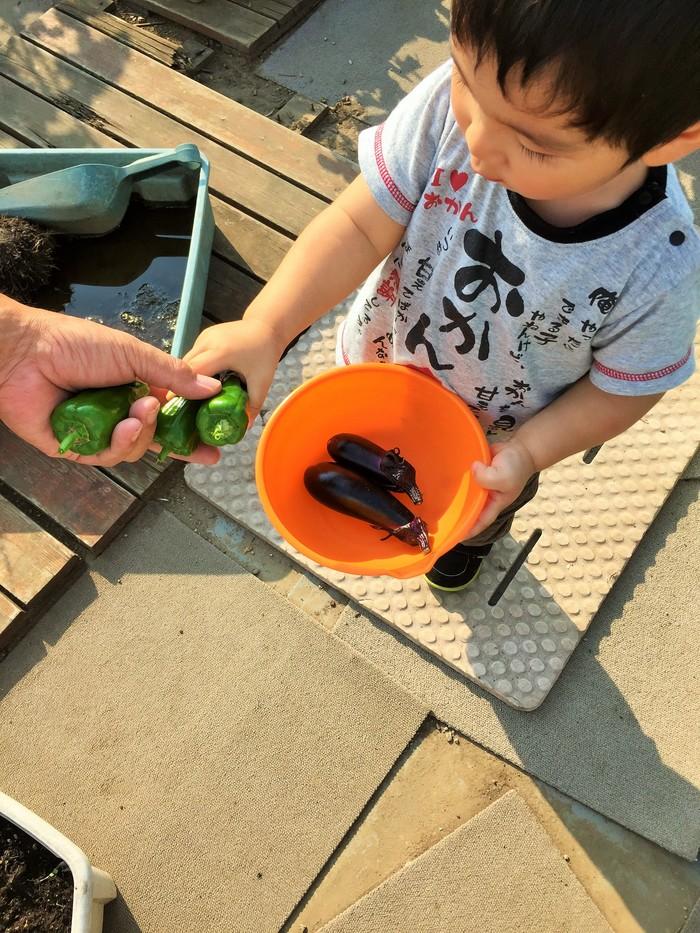 植物を育てることが苦手なママでも大丈夫!知識ゼロから始めるベランダ菜園のススメの画像2