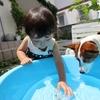 夏がチャンス!小学校入学前に子どもの水嫌いを克服する方法とは?のタイトル画像
