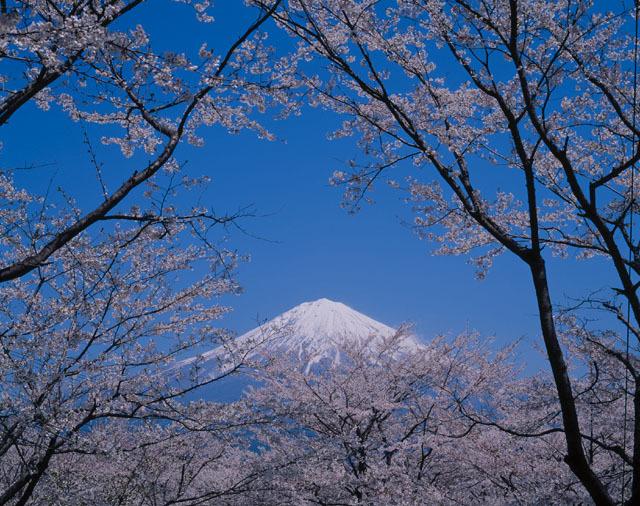 英語教育と同じぐらい大切な日本の文化教育!国際交流に必要なのは英語力だけじゃない!の画像1