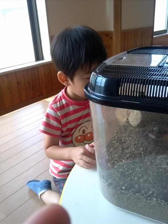 【体験談】3歳の息子、9月から保育所デビュー!の画像4