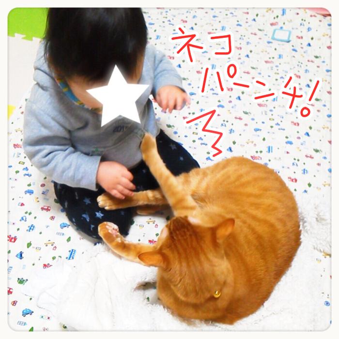 兄弟?友達?息子と猫のわんぱく成長記の画像7