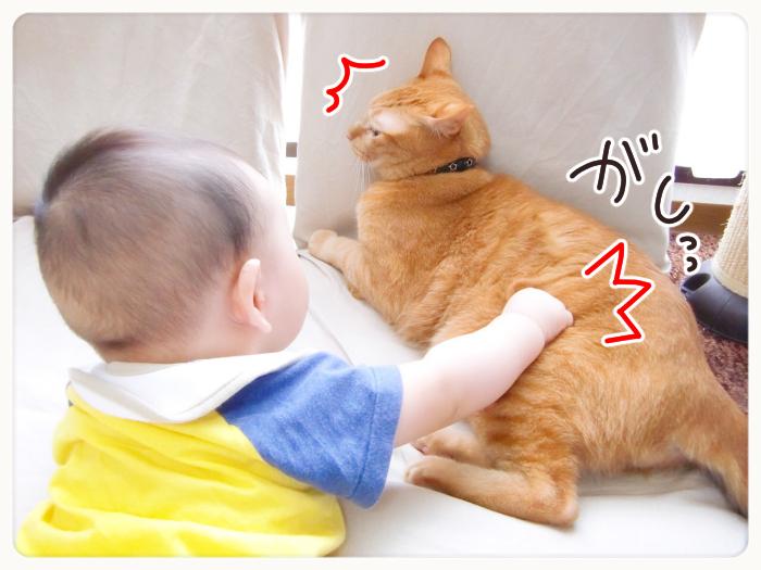 兄弟?友達?息子と猫のわんぱく成長記の画像2