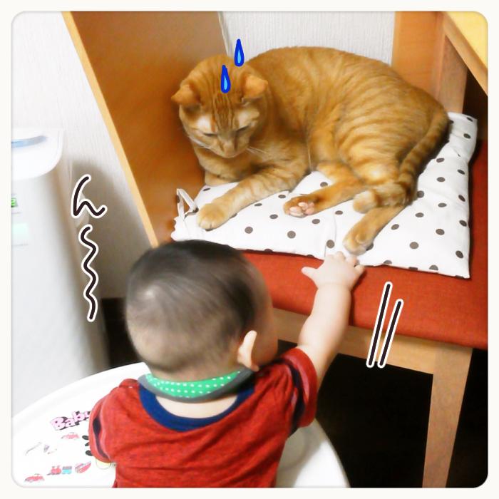 兄弟?友達?息子と猫のわんぱく成長記の画像5