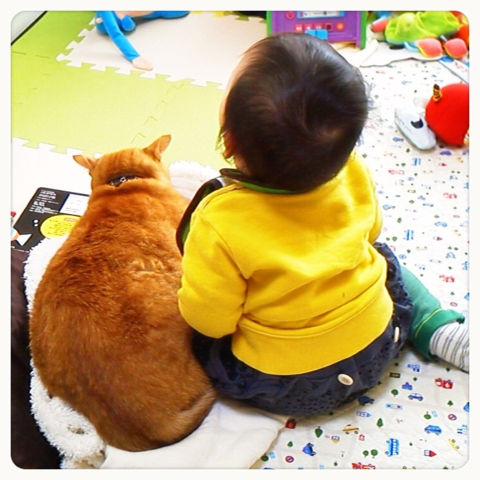 兄弟?友達?息子と猫のわんぱく成長記の画像8