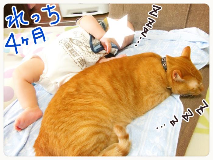 兄弟?友達?息子と猫のわんぱく成長記の画像1