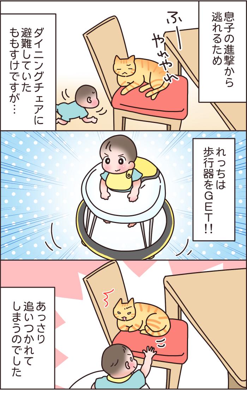 兄弟?友達?息子と猫のわんぱく成長記の画像4