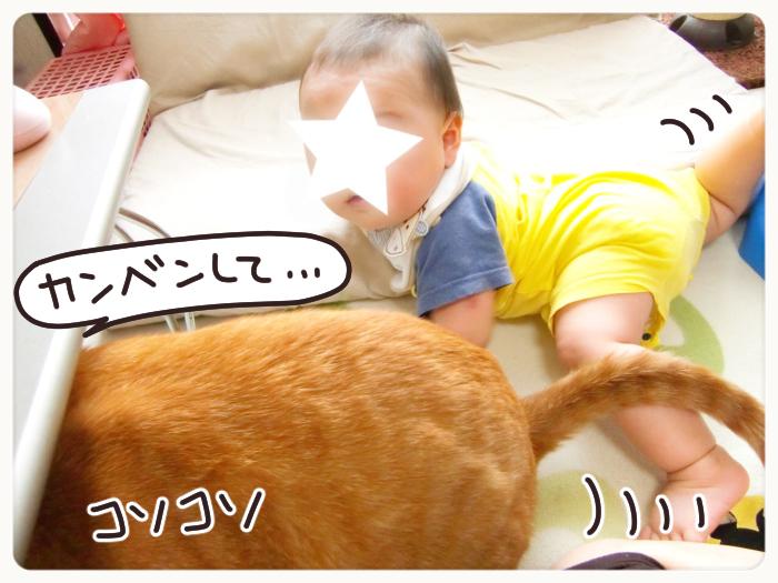 兄弟?友達?息子と猫のわんぱく成長記の画像3