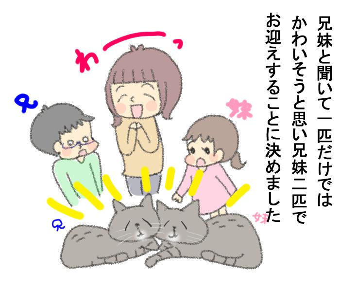 「その猫実は…」保護施設での猫との出会いに、私たちが決断したことの画像8