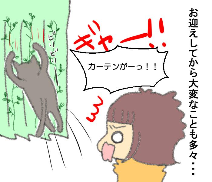 「その猫実は…」保護施設での猫との出会いに、私たちが決断したことの画像9