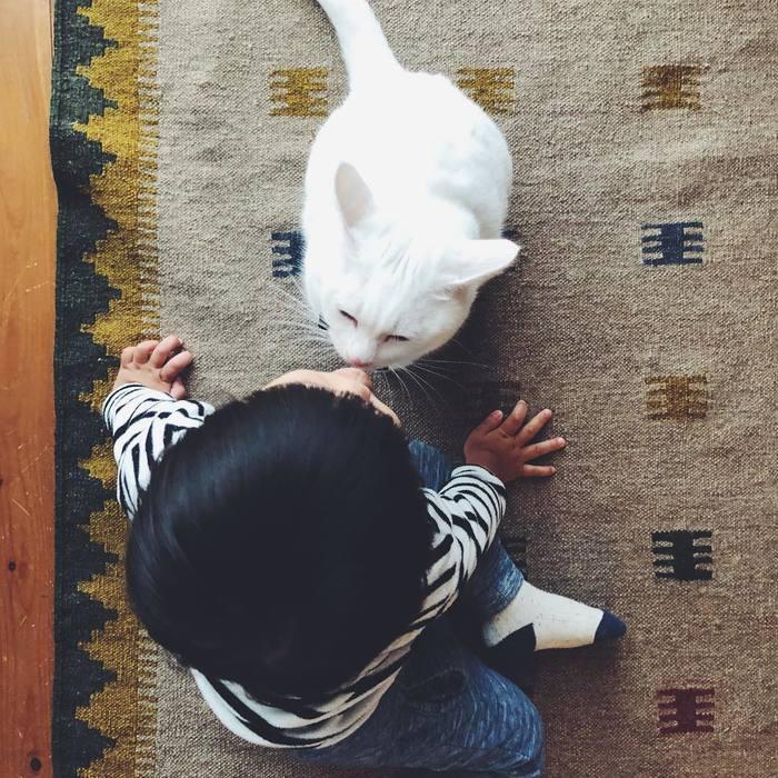 猫とボクはとっても仲良し。だって、赤ちゃんの時から一緒にいるんだもん。の画像5