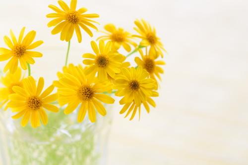 k_flowerの画像